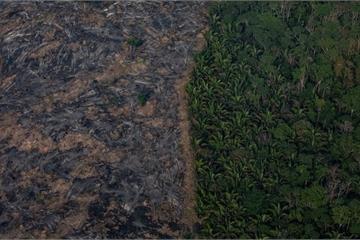 Các khu rừng nhiệt đới trên thế giới đang mất dần khả năng hấp thụ CO2