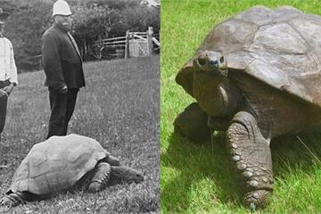 """Cuộc sống thường ngày của """"cụ"""" rùa khổng lồ sống qua 3 thế kỷ"""