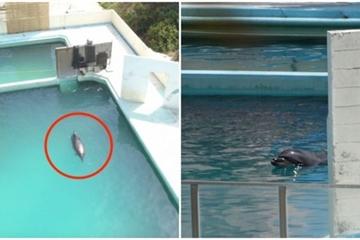 Cá heo 'cô đơn nhất thế giới' chết thảm bên trong thủy cung bị bỏ hoang