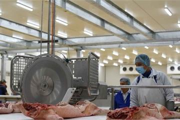 Masan ngừng bán thịt mát do dịch tả lợn Châu Phi gần khu chế biến