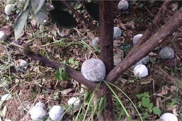 Vụ phá hoại vườn cam 17ha ở Hòa Bình: CA Kim Bôi tiếp nhận giải quyết đơn khiếu nại