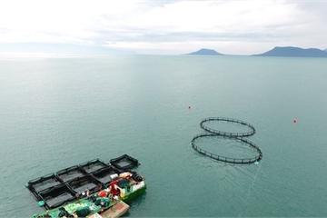 Chiến lược phát triển bền vững nuôi biển Việt Nam