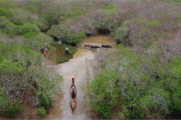 Phát động cuộc thi vẽ tranh bảo vệ rừng ngập mặn dành cho học sinh
