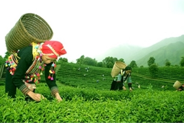 Lai Châu quyết thực hiện tiêu chí 'kinh tế và tổ chức sản xuất' trong nông thôn mới