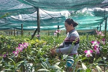 Huyện Đất Đỏ: 10 năm thực hiện mục tiêu quốc gia về xây dựng Nông thôn mới