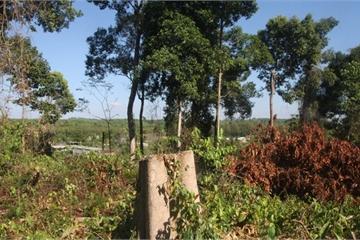 Sáng nay, Phó chủ tịch tỉnh kiểm tra vụ phá rừng ở Khu bảo tồn Đồng Nai