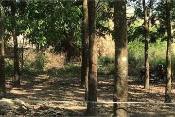 Phát hiện thi thể cháy đen trong rừng cao su lúc sáng sớm