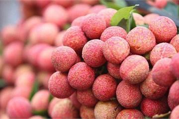 Trung Quốc - nước trồng vải lớn nhất thế giới, vẫn nhập khẩu mạnh từ Việt Nam