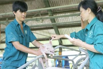 Dịch tả lợn Châu Phi: Lò mổ tại TP.HCM không nhận lợn từ các tỉnh phía Bắc
