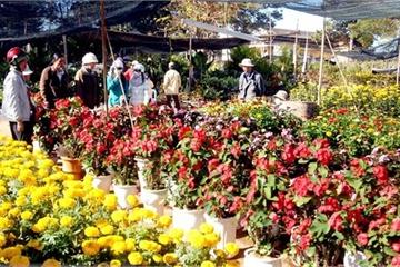Khẩn: Những người đã đến chợ hoa Mê Linh liên hệ ngay với cơ sở y tế