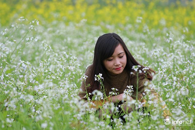 Dịu dàng mùa hoa cải ven Hà Nội - ảnh 5