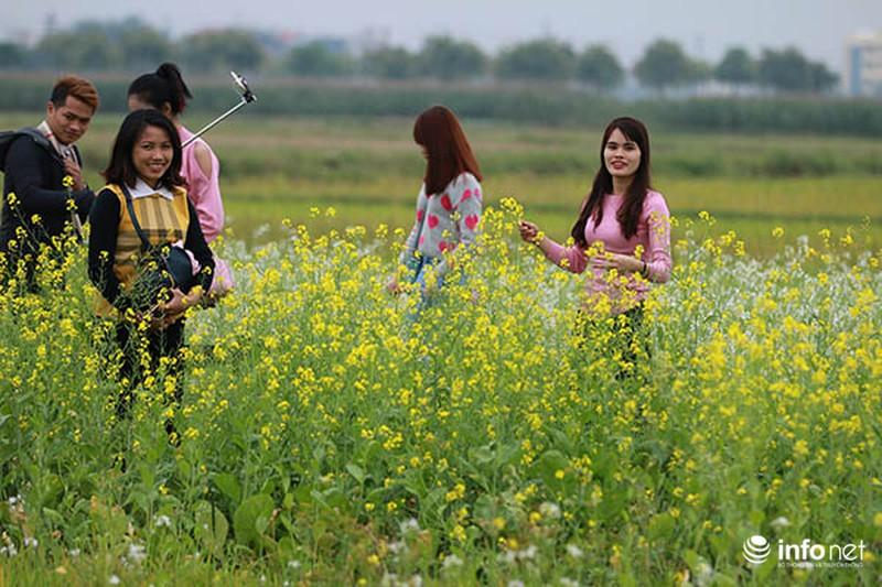 Dịu dàng mùa hoa cải ven Hà Nội - ảnh 10