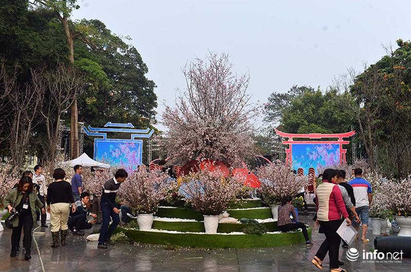 Chưa khai mạc, lễ hội hoa anh đào Nhật Bản đã hút hàng nghìn người Hà Nội - ảnh 1