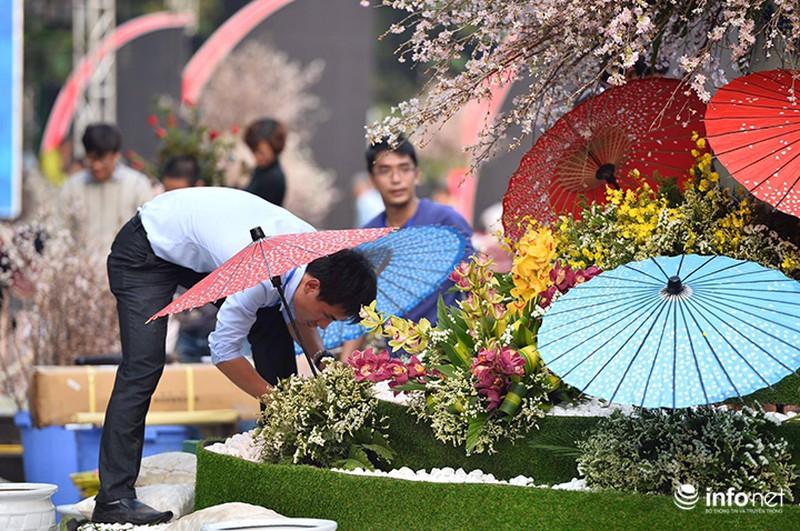 Chưa khai mạc, lễ hội hoa anh đào Nhật Bản đã hút hàng nghìn người Hà Nội - ảnh 3
