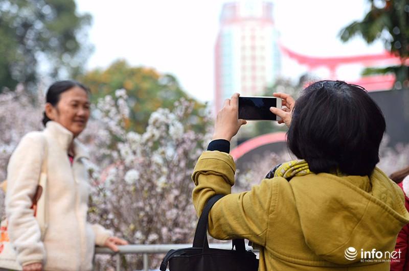 Chưa khai mạc, lễ hội hoa anh đào Nhật Bản đã hút hàng nghìn người Hà Nội - ảnh 6