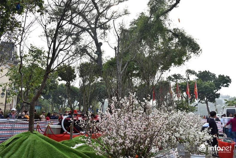 Chưa khai mạc, lễ hội hoa anh đào Nhật Bản đã hút hàng nghìn người Hà Nội - ảnh 7