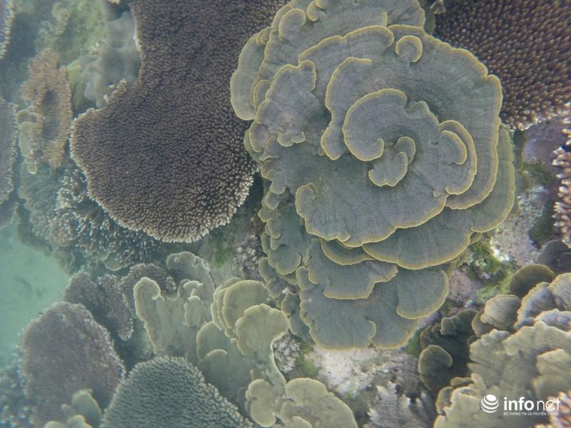 Kỳ ảo san hô ở Hòn Cau - ảnh 13