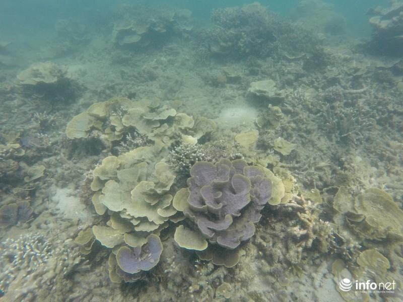 Kỳ ảo san hô ở Hòn Cau - ảnh 4
