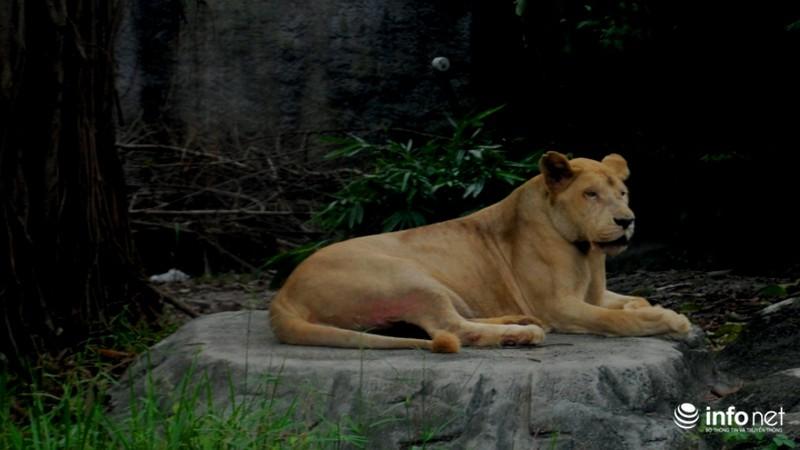 Tình bạn lạ lùng giữa hổ và chó trong khu du lịch Đại Nam - ảnh 9