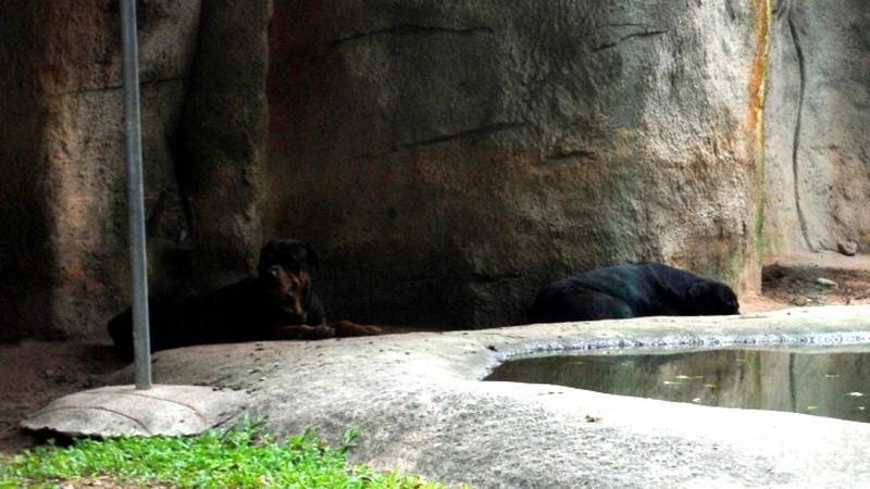 Tình bạn lạ lùng giữa hổ và chó trong khu du lịch Đại Nam - ảnh 6
