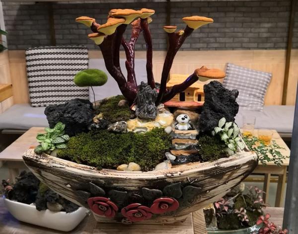 Giá đắt đỏ tiền triệu, nấm linh chi bonsai vẫn hút khách - 2