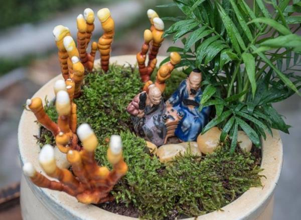 Giá đắt đỏ tiền triệu, nấm linh chi bonsai vẫn hút khách - 7