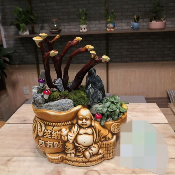 Giá đắt đỏ tiền triệu, nấm linh chi bonsai vẫn hút khách - 8