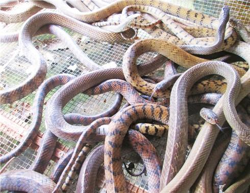 Trăn, rắn, cá sấu cùng đua giảm giá - ảnh 1