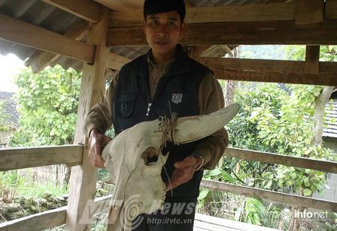 Vùng đất sọ trâu bí ẩn của bộ tộc ít người ở Hà Giang - ảnh 15