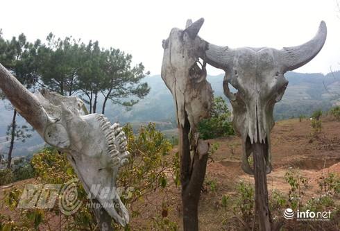 Vùng đất sọ trâu bí ẩn của bộ tộc ít người ở Hà Giang - ảnh 17