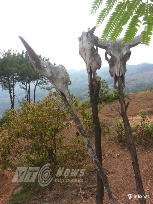 Vùng đất sọ trâu bí ẩn của bộ tộc ít người ở Hà Giang - ảnh 18