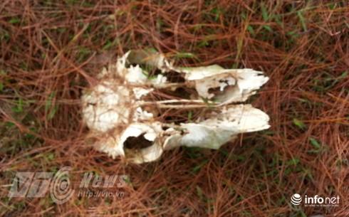 Vùng đất sọ trâu bí ẩn của bộ tộc ít người ở Hà Giang - ảnh 5