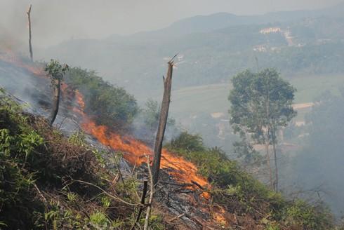 Hà Tĩnh: Hàng trăm cán bộ kiểm lâm chữa cháy rừng dữ dội lúc giữa đêm - ảnh 7