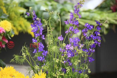 Hà Nội: Đào, hoa ra phố ngày Rằm tháng Chạp - ảnh 11
