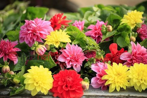 Hà Nội: Đào, hoa ra phố ngày Rằm tháng Chạp - ảnh 13