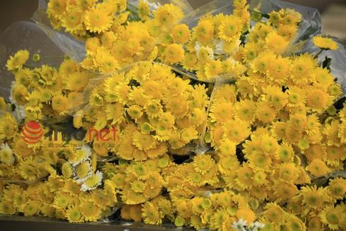 Hà Nội: Đào, hoa ra phố ngày Rằm tháng Chạp - ảnh 10