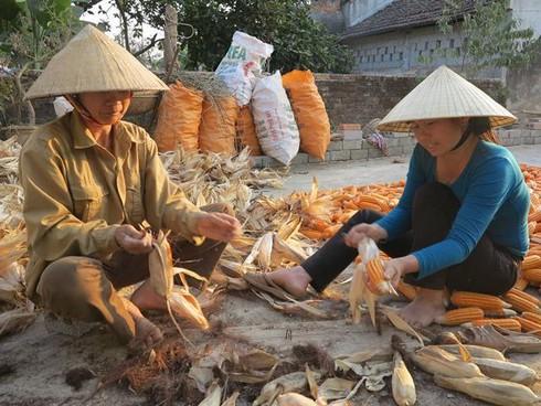 Cuộc sống mến yêu qua mắt nhìn của trẻ em nông thôn Việt Nam - ảnh 15