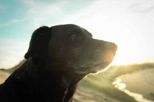 Hành trình 800km đi bộ tới World Cup tìm chủ của chú chó Negros - ảnh 1