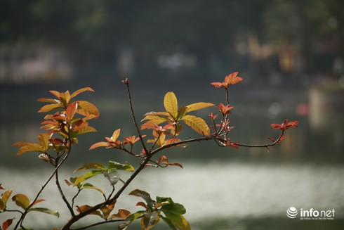 Dự báo thời tiết 18/1: Bắc bộ ấm dần lên, Hà Nội nắng đẹp - ảnh 1