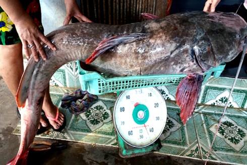 Mưu sinh với nghề câu cá lăng trên sông Sêrêpôk - ảnh 1