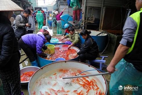 Về phiên chợ cá chép không bán theo con - ảnh 1