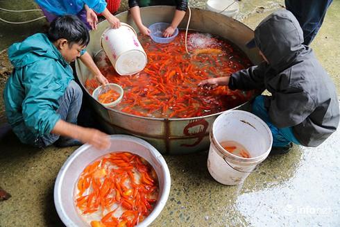 Về phiên chợ cá chép không bán theo con - ảnh 2