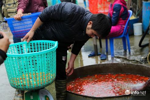 Về phiên chợ cá chép không bán theo con - ảnh 4