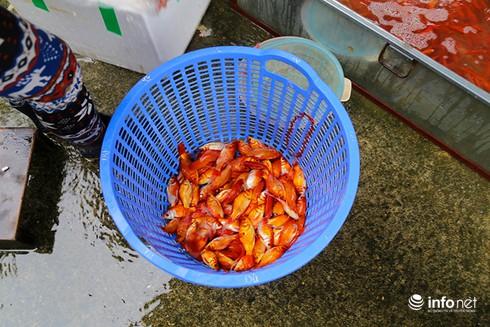 Về phiên chợ cá chép không bán theo con - ảnh 6