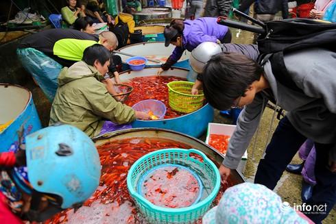 Về phiên chợ cá chép không bán theo con - ảnh 7