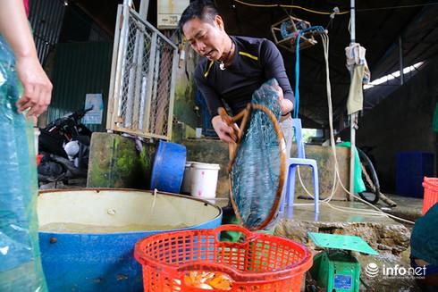 Về phiên chợ cá chép không bán theo con - ảnh 8