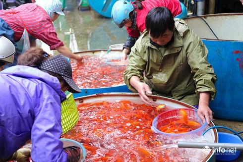 Về phiên chợ cá chép không bán theo con - ảnh 10