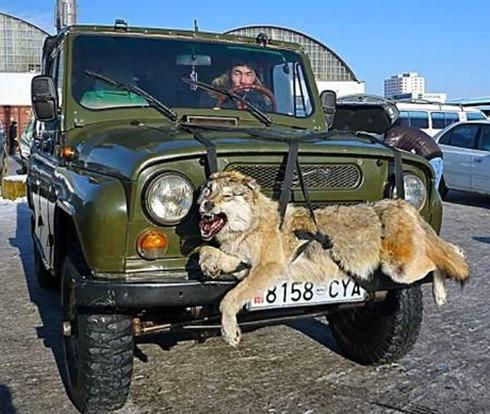 Ngắm xe hơi trên đường phố Mông Cổ - ảnh 2