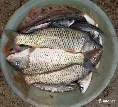Thanh Hóa: Lấy mẫu kiểm tra tìm nguyên nhân cá chết trắng 10km trên sông Âm - ảnh 2