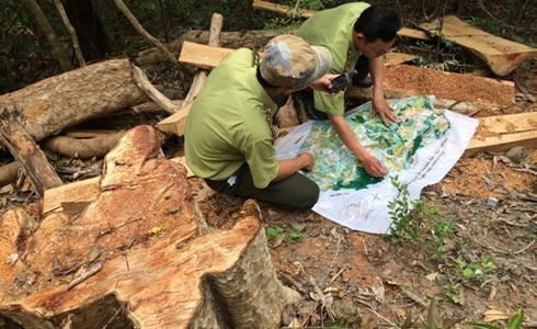 Đắk Lắk: Gần 50 đối tượng bịt mặt vây xe kiểm lâm cướp gỗ lậu trong đêm - ảnh 1